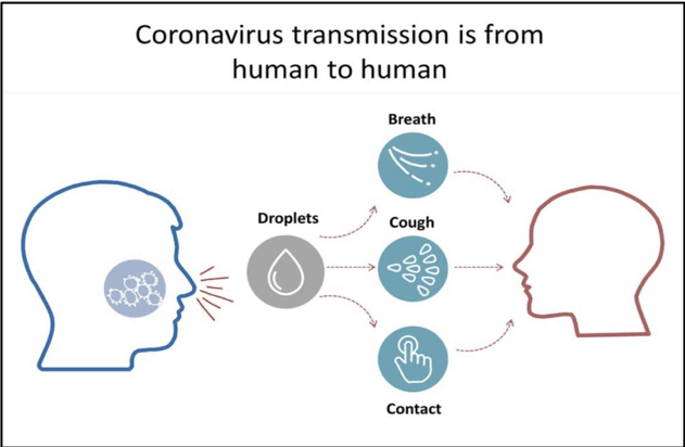 coronavirus transmission from human to human